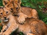 Replay Nous, les bébés animaux