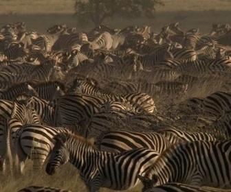 Les grandes migrations replay