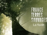 Replay France Terres Sauvages : la forêt