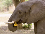 Replay Together For Good Wildlife Special - Fun Animal Facts