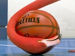 Replay Athleticus - Basket