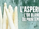 Replay Le doc du dimanche - L'asperge, l'or blanc du printemps