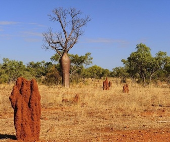 Replay Gros plan sur la nature - S2 : Le Centre Rouge australien