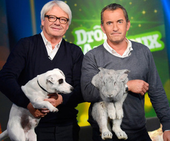 Drôles d'animaux replay
