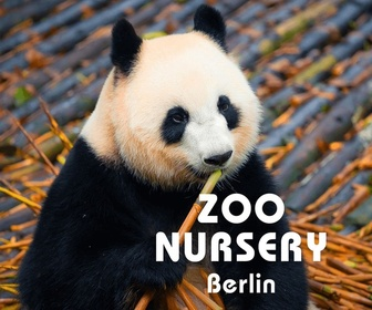 Replay Zoo nursery : Berlin - S6 : Épisode du lundi 24 décembre 2018
