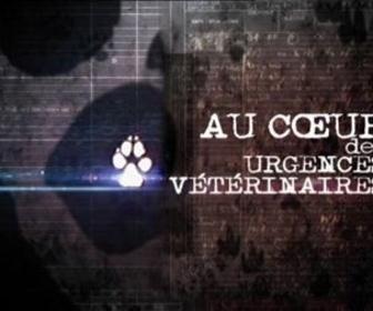 Au coeur des urgences vétérinaires replay